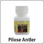 pilose-antler1